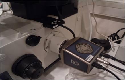 紡錘体観察用の専用カメラ